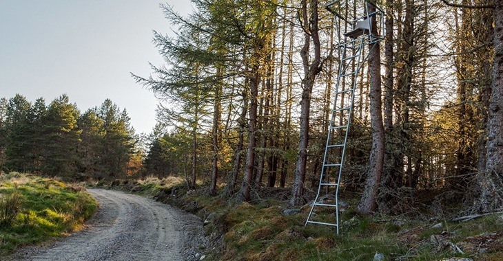 Ladder Tree Stand and thick trees